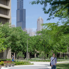 A native plant-lined view looking east with a path of permeable pavement leading you to a distant image of the Sears Tower amidst the group of mature trees in the Grove.