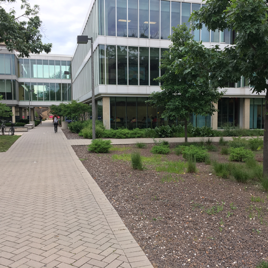 rain garden and permeable pavement in front of Lincoln Hall