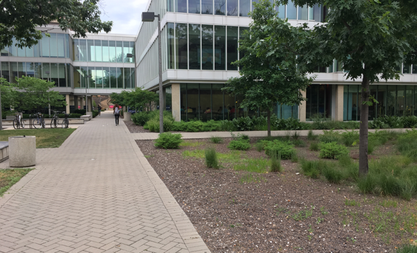 permeable paving and bioswlaes near Lincoln Hall