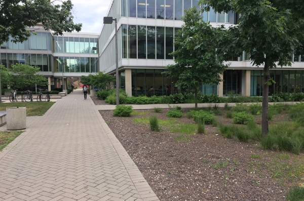 permeable pavement and a rain garden outside of Lincoln Hall