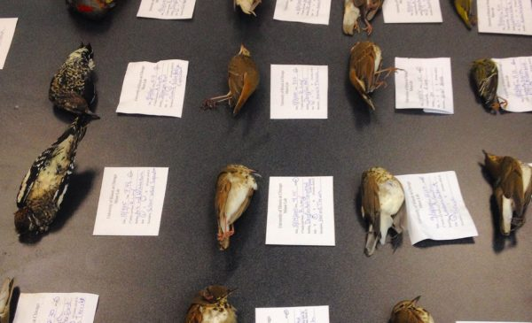 bird carcasses discovered on UIC grounds, tagged with identifying informaiton