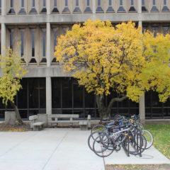 bikes locked up in front of colorful trees at Stevenson Hall Photo: Megan Strand