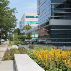 Mile Square's Native Plant Garden