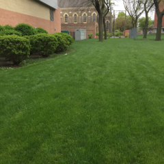 grassy area outside of CFSB before the native planting