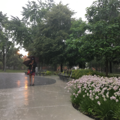 student walking on the permeable pavement in the Grove holding her umbrella during a summer rain storm