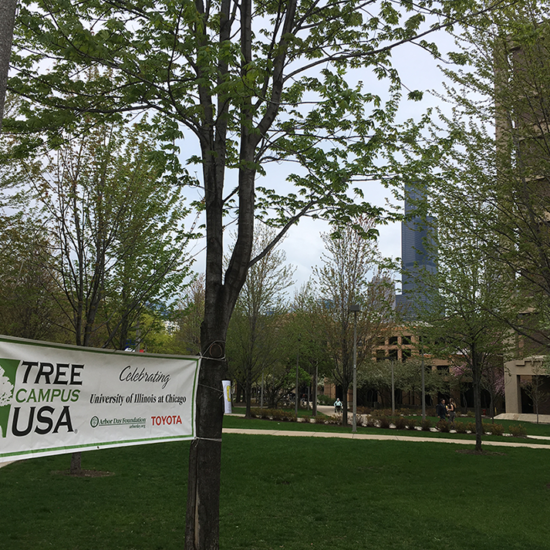 Tree Campus USA banner tied to a tree and lamp post