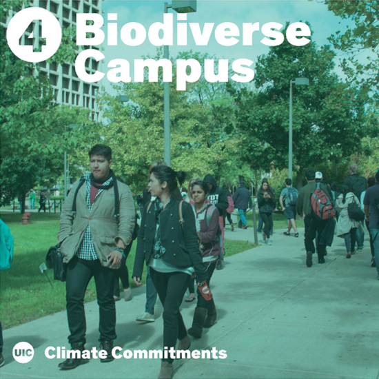 Ethnically diverse students walking to the Quad under a biodiverse tree canopy