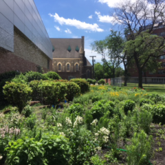 The 2-year-old prairie garden with short native plants