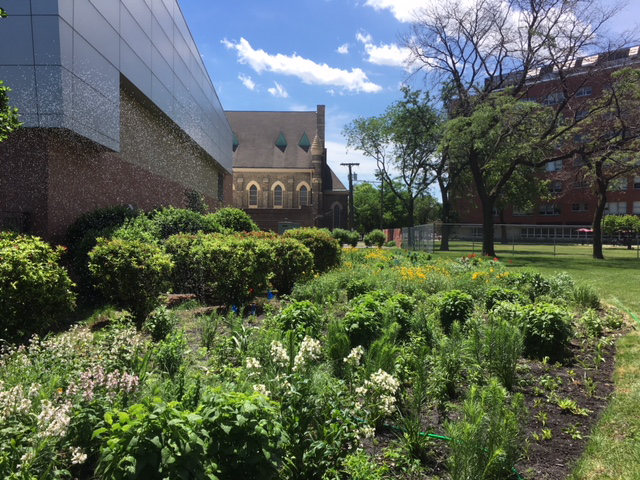 prairie garden adjacent to the Center for Structural Biology Building