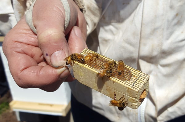 bee keeper holds small frame of honey bees
