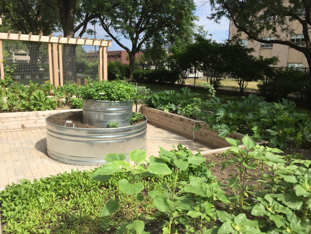 The Applied Health Science Nutrition Garden full of green fruits and vegetables