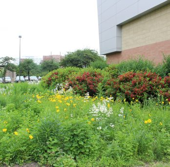 native plants in the Little Prairie on the Campus