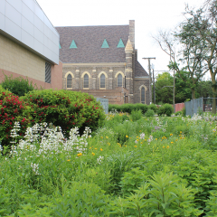 prairi garden in the 3rd summer of growth