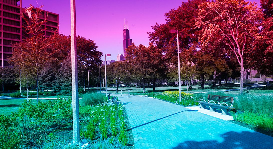 people walking through the Chicago Circle Memorial Grove with Sears Tower visible in the distance