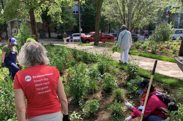volunteers learn about native plant gardening