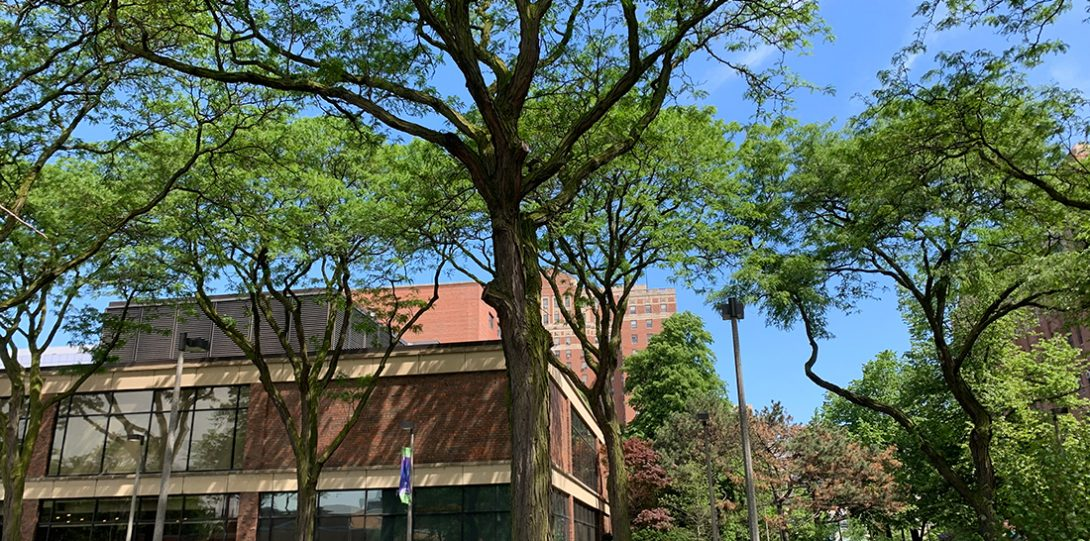 many large honey locust trees give coverage to people and plants in the area
