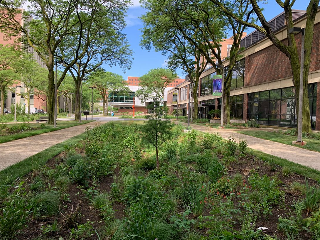 rain garden in the middle of two walkways that replaced the deteriorated pavers